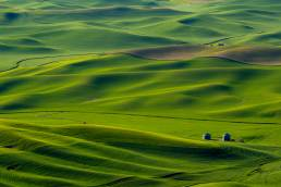 Wheat Fields of the Palouse