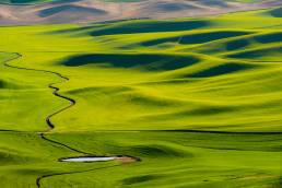 Springtime wheat fields of the Palouse