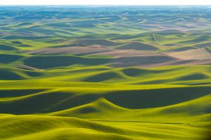 The Palouse in Eastern Washington as viewed from Steptoe Butte